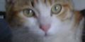 野良猫親子に関する観察メモ